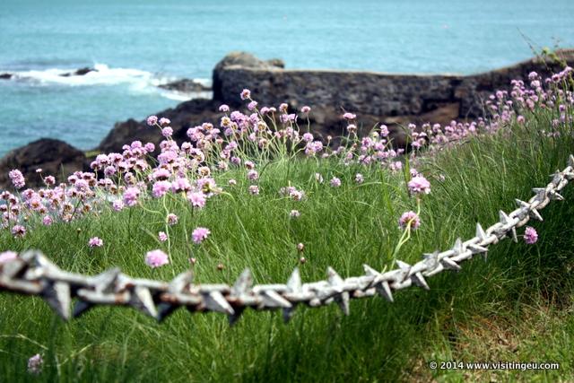 Coast in Guernsey