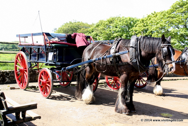 Horse and Carriage in Sark